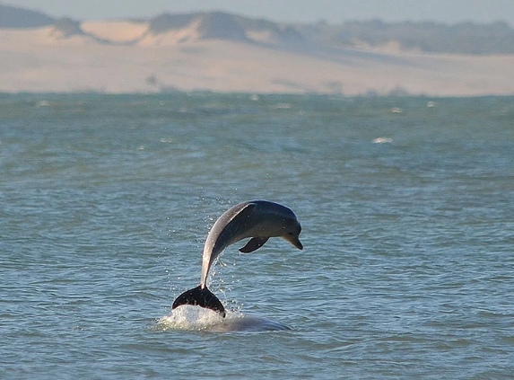 Baía dos Golfinhos-RN: Conheça